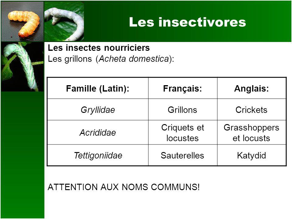 Les insectivores Les insectes nourriciers Les grillons (Acheta domestica): ATTENTION AUX NOMS COMMUNS! Famille (Latin):Français:Anglais: GryllidaeGril