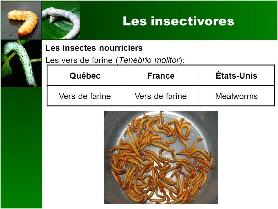 Les insectivores Les insectes nourriciers Les vers de farine (Tenebrio molitor): QuébecFranceÉtats-Unis Vers de farine Mealworms