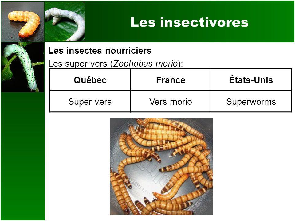 Les insectivores Les insectes nourriciers Les super vers (Zophobas morio): QuébecFranceÉtats-Unis Super versVers morioSuperworms