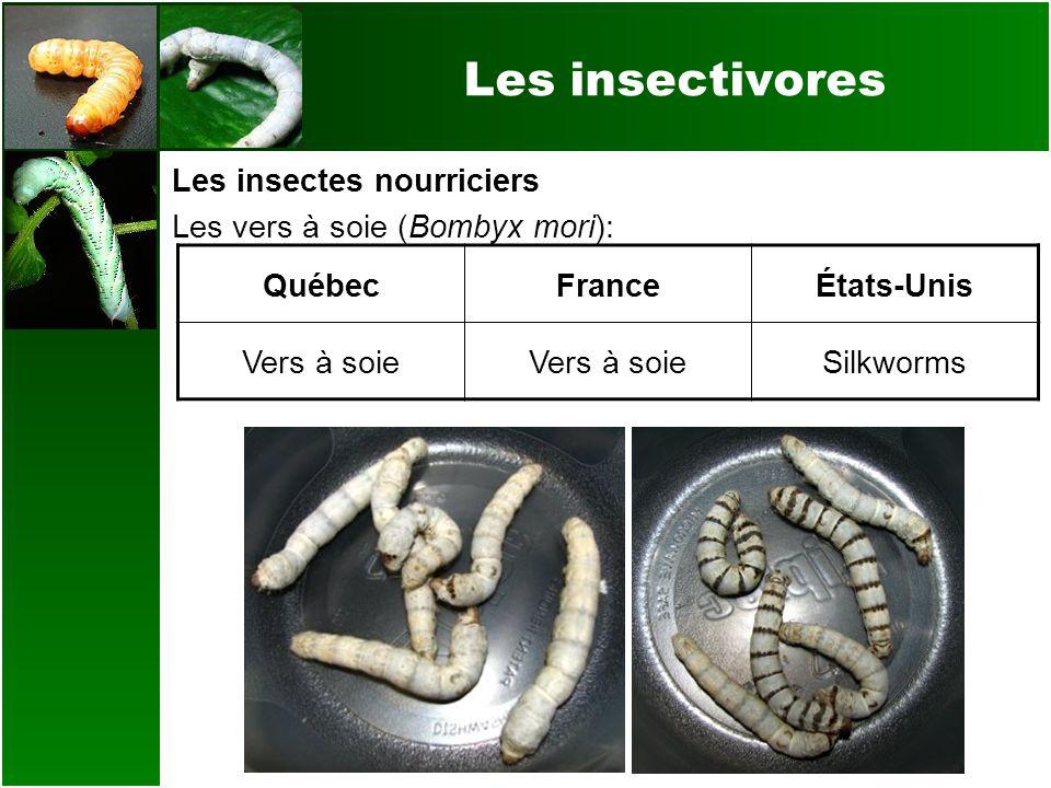 Les insectivores Les insectes nourriciers Les vers à soie (Bombyx mori): QuébecFranceÉtats-Unis Vers à soie Silkworms