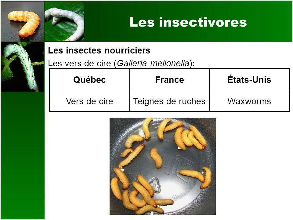 Les insectivores Les insectes nourriciers Les vers de cire (Galleria mellonella): QuébecFranceÉtats-Unis Vers de cireTeignes de ruchesWaxworms