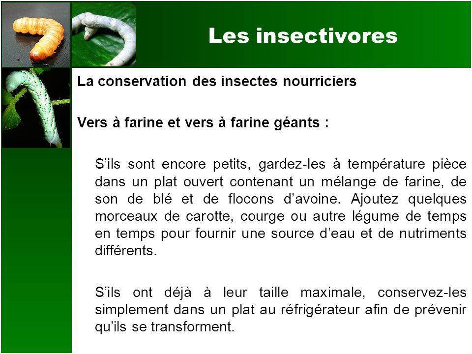 Les insectivores La conservation des insectes nourriciers Vers à farine et vers à farine géants : Sils sont encore petits, gardez-les à température pi