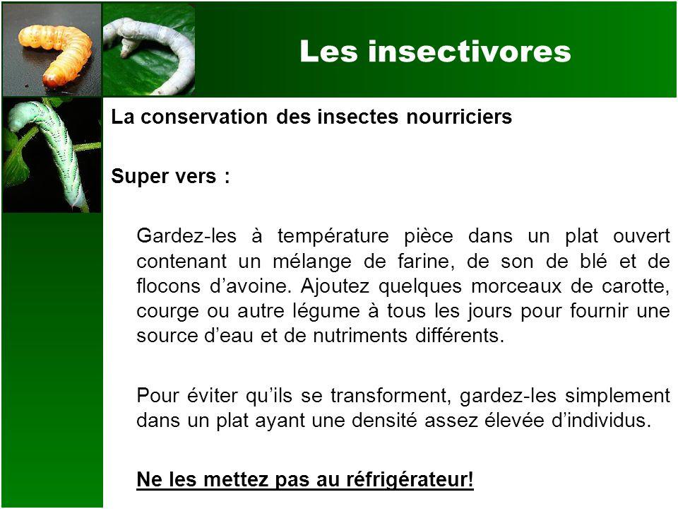 Les insectivores La conservation des insectes nourriciers Super vers : Gardez-les à température pièce dans un plat ouvert contenant un mélange de fari