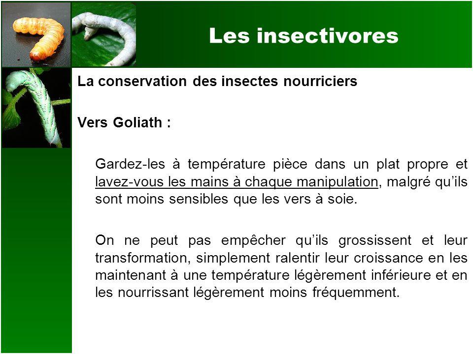Les insectivores La conservation des insectes nourriciers Vers Goliath : Gardez-les à température pièce dans un plat propre et lavez-vous les mains à