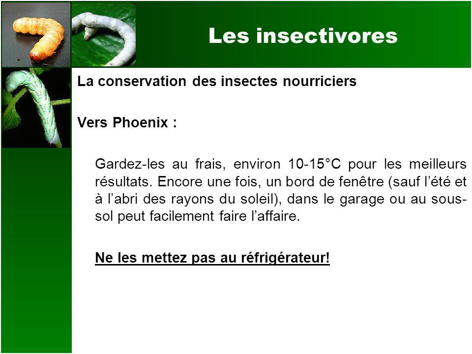 Les insectivores La conservation des insectes nourriciers Vers Phoenix : Gardez-les au frais, environ 10-15°C pour les meilleurs résultats. Encore une
