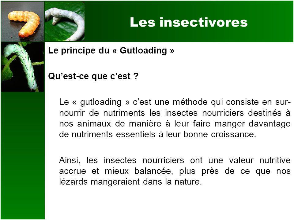 Les insectivores Le principe du « Gutloading » Quest-ce que cest ? Le « gutloading » cest une méthode qui consiste en sur- nourrir de nutriments les i