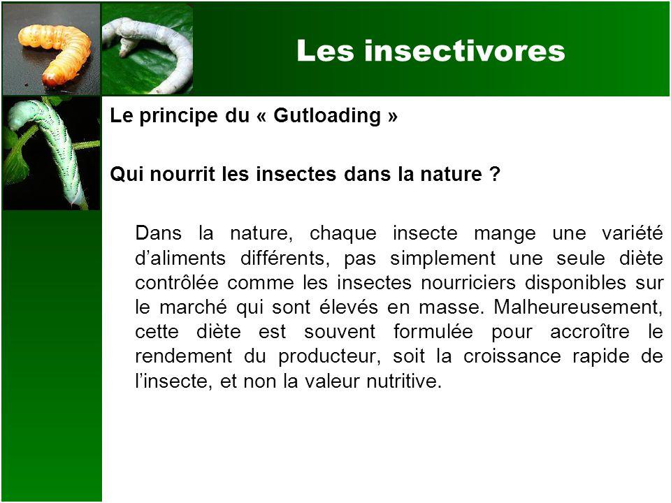 Les insectivores Le principe du « Gutloading » Qui nourrit les insectes dans la nature ? Dans la nature, chaque insecte mange une variété daliments di