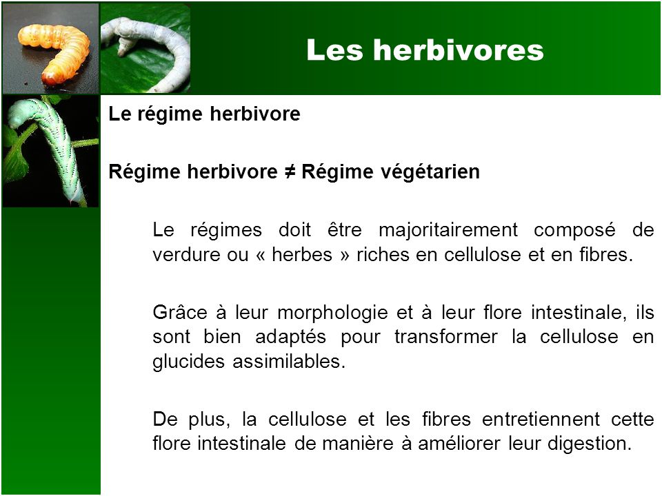 Les herbivores Le régime herbivore (En % de la masse consommée) Composition :Sous la forme de : 50-70% Glucides 10-25% Protéines 5-10% Gras 1-5% Autres 60-80% de légumes feuillus 10-15% de fleurs comestibles 10-15% de graines et légumineuses 5-10% de légumes autres < 5% de fruits