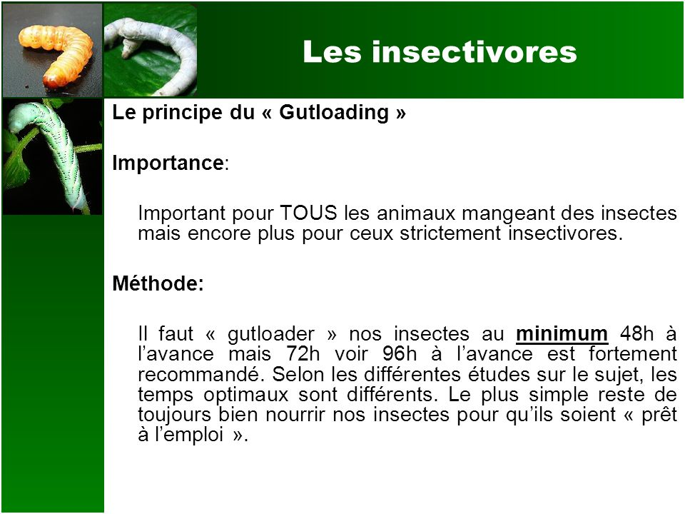 Les insectivores Le principe du « Gutloading » Importance: Important pour TOUS les animaux mangeant des insectes mais encore plus pour ceux strictemen