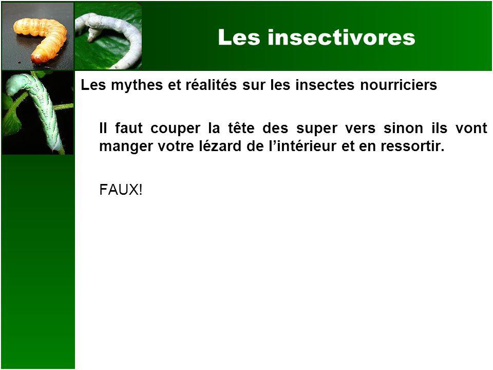 Les insectivores Les mythes et réalités sur les insectes nourriciers Il faut couper la tête des super vers sinon ils vont manger votre lézard de linté