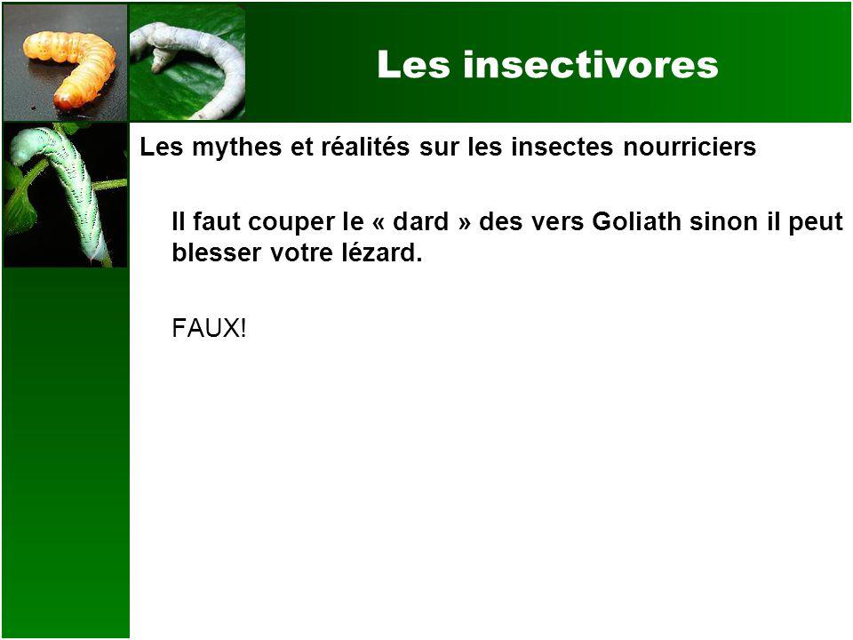 Les insectivores Les mythes et réalités sur les insectes nourriciers Il faut couper le « dard » des vers Goliath sinon il peut blesser votre lézard. F