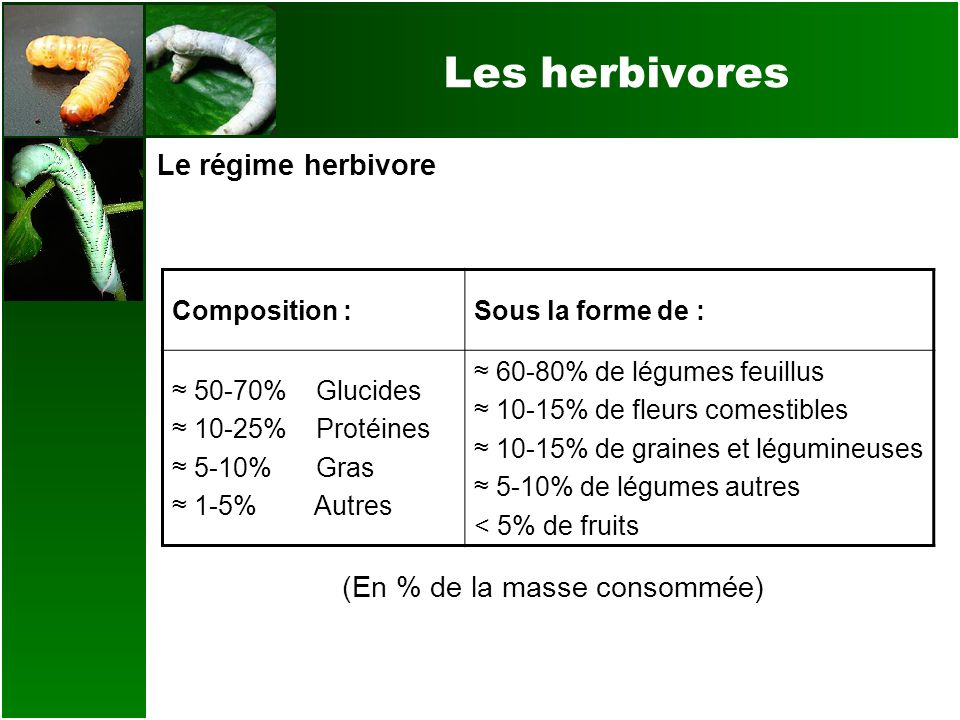 Les herbivores Le régime herbivore (En % de la masse consommée) Composition :Sous la forme de : 50-70% Glucides 10-25% Protéines 5-10% Gras 1-5% Autre