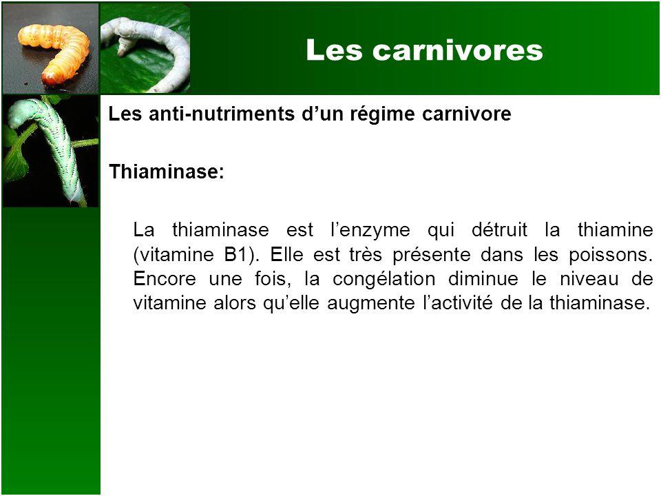 Les carnivores Les anti-nutriments dun régime carnivore Thiaminase: La thiaminase est lenzyme qui détruit la thiamine (vitamine B1). Elle est très pré