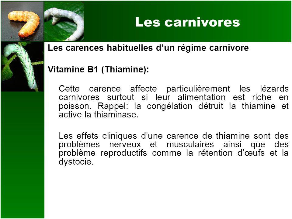 Les carnivores Les carences habituelles dun régime carnivore Vitamine B1 (Thiamine): Cette carence affecte particulièrement les lézards carnivores sur