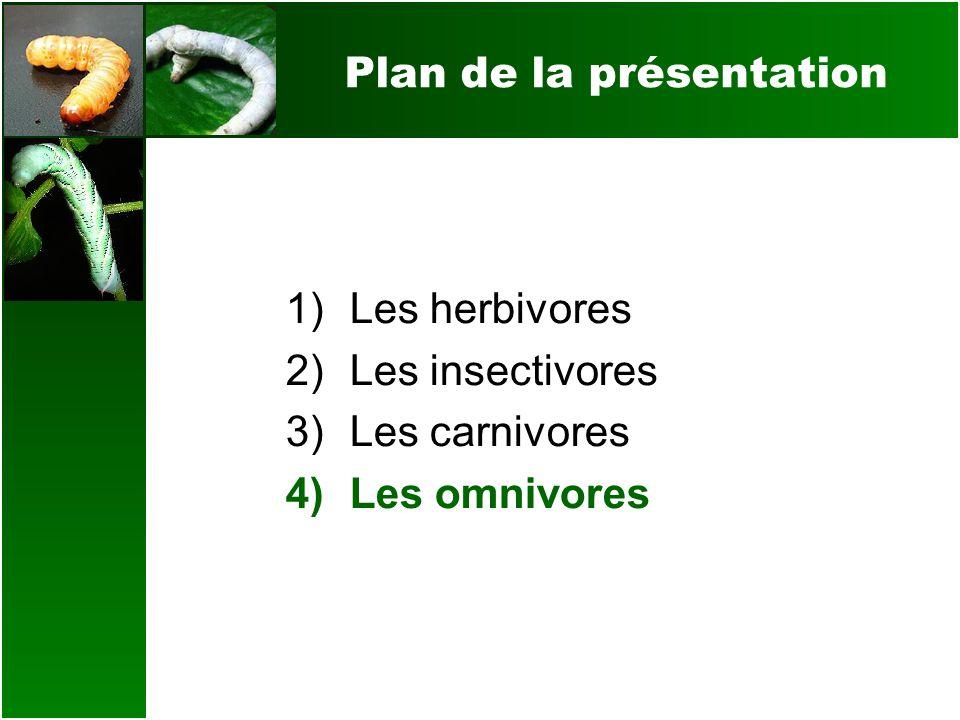 Plan de la présentation 1)Les herbivores 2)Les insectivores 3)Les carnivores 4)Les omnivores