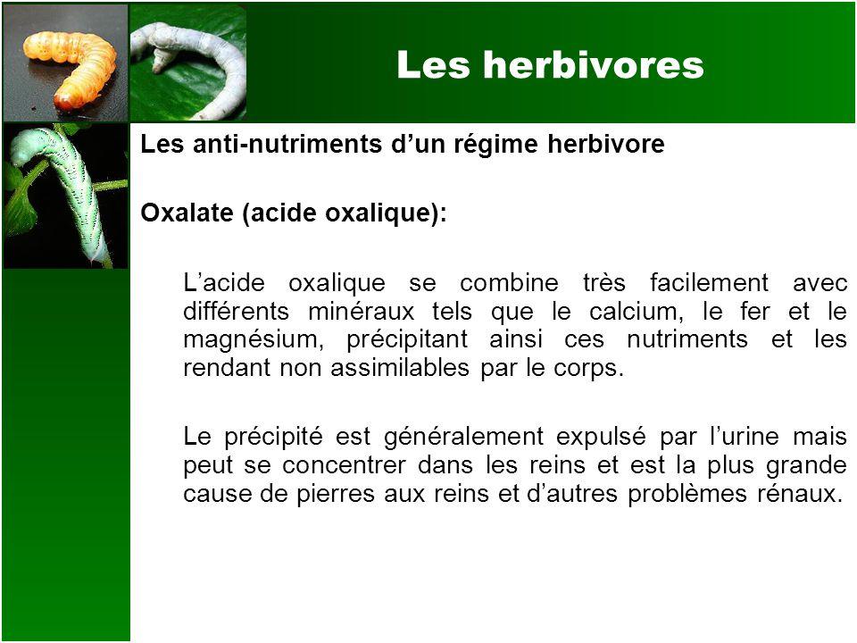Les herbivores Les anti-nutriments dun régime herbivore Oxalate (acide oxalique): Lacide oxalique se combine très facilement avec différents minéraux