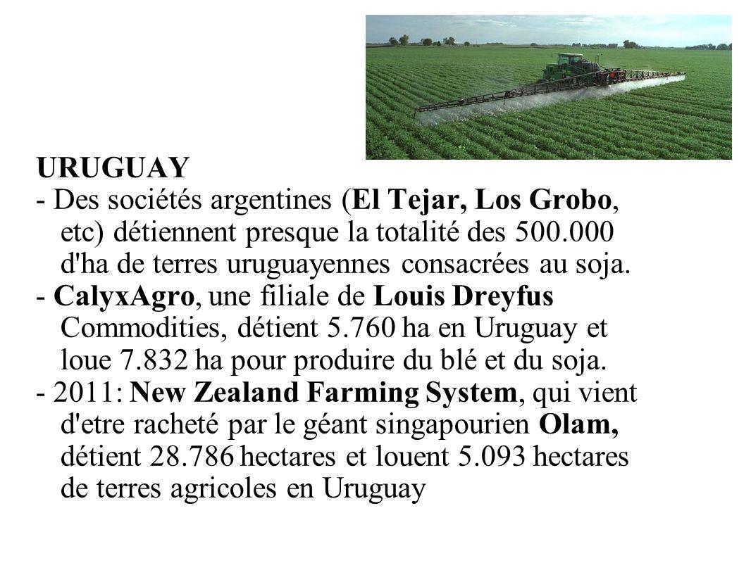 GRAIN 10/2011 URUGUAY - Des sociétés argentines (El Tejar, Los Grobo, etc) détiennent presque la totalité des 500.000 d'ha de terres uruguayennes cons