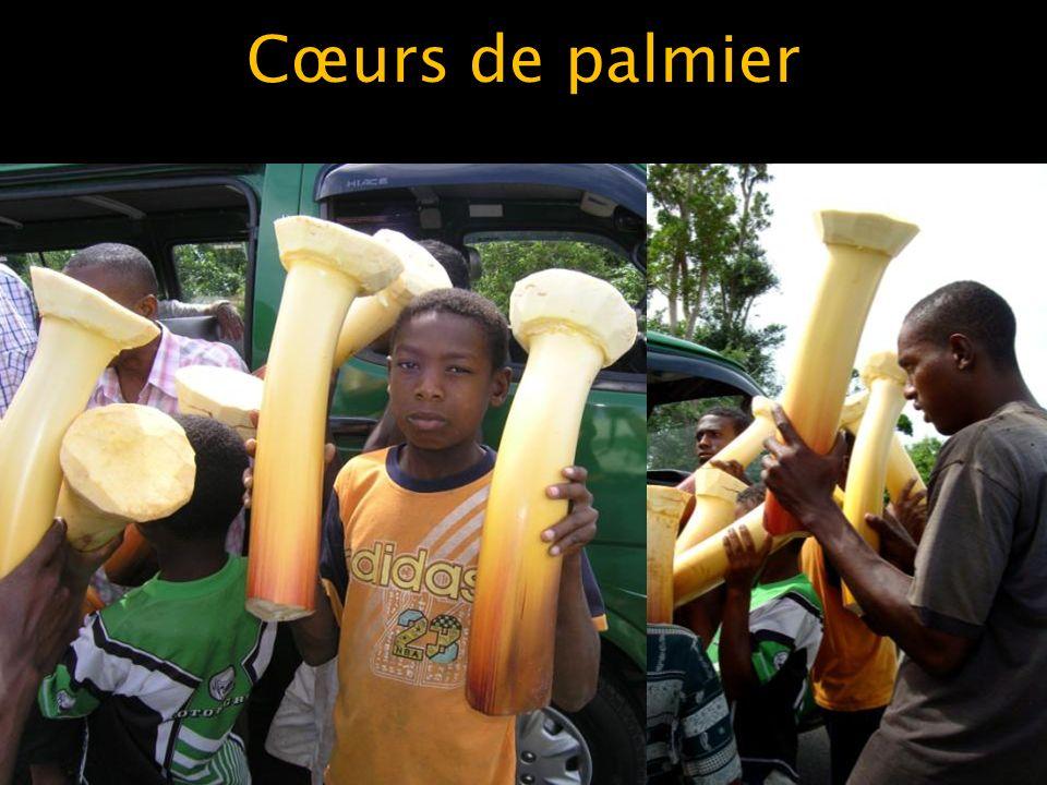 Cœurs de palmier