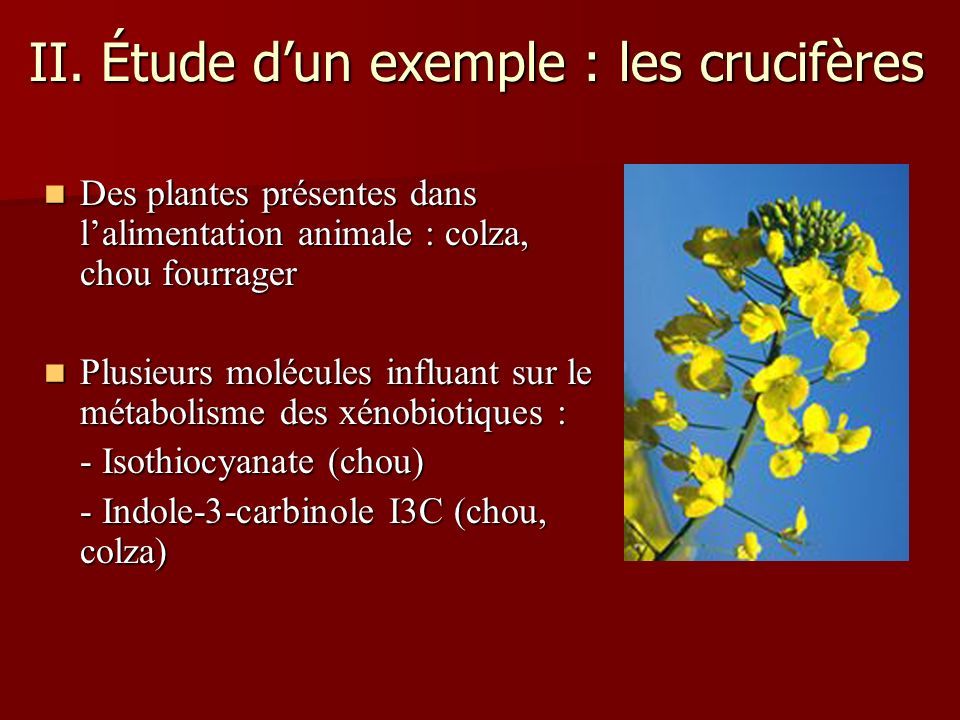 II. Étude dun exemple : les crucifères Des plantes présentes dans lalimentation animale : colza, chou fourrager Des plantes présentes dans lalimentati