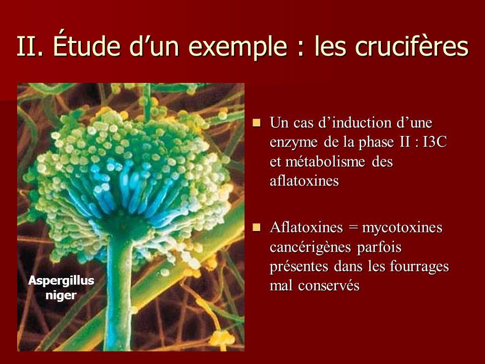 II. Étude dun exemple : les crucifères Un cas dinduction dune enzyme de la phase II : I3C et métabolisme des aflatoxines Un cas dinduction dune enzyme