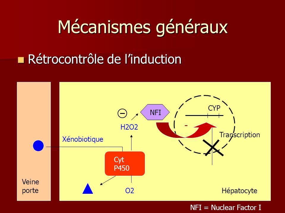 Mécanismes généraux Rétrocontrôle de linduction Rétrocontrôle de linduction Transcription Cyt P450 Xénobiotique Veine porte CYP - O2 H2O2 NFI NFI = Nuclear Factor I Hépatocyte