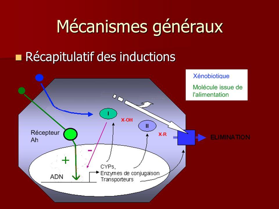 Mécanismes généraux Récapitulatif des inductions Récapitulatif des inductions - +