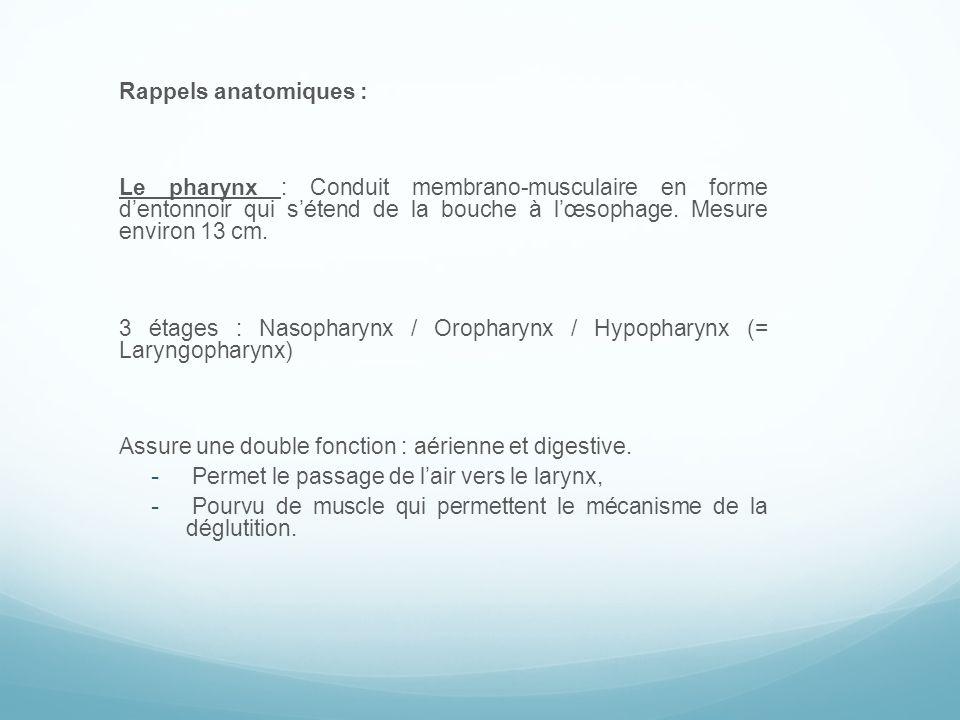 Le larynx : Tube rigide constitué par une armature cartilagineuse solide.