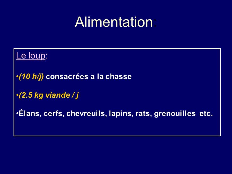 Alimentation: Le loup: (10 h/j) consacrées a la chasse (2.5 kg viande / j Élans, cerfs, chevreuils, lapins, rats, grenouilles etc.