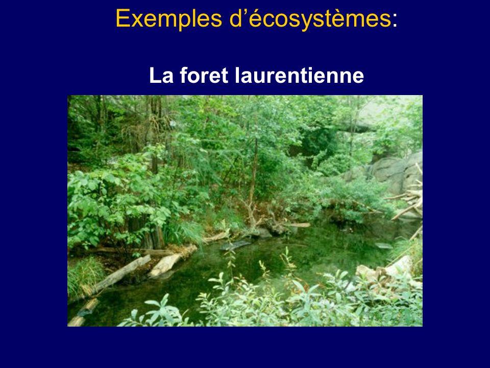 Exemples décosystèmes: La foret laurentienne