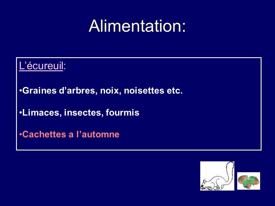 Alimentation: Lécureuil: Graines darbres, noix, noisettes etc. Limaces, insectes, fourmis Cachettes a lautomne