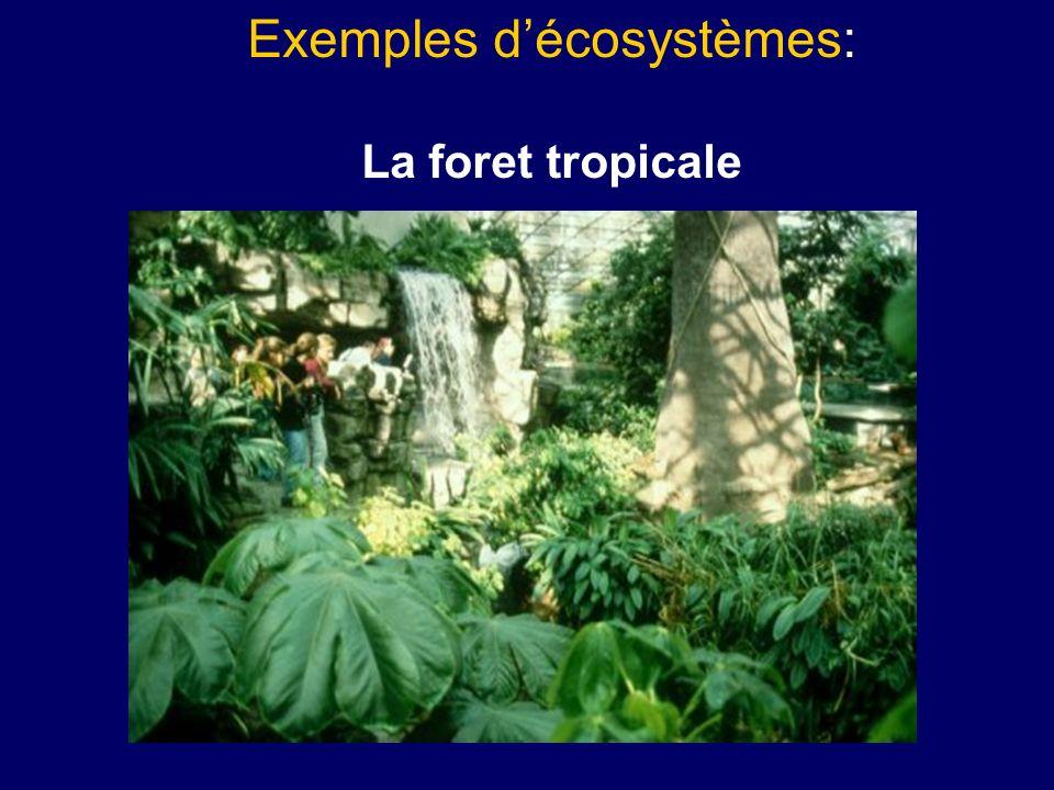 Exemples décosystèmes: La foret tropicale