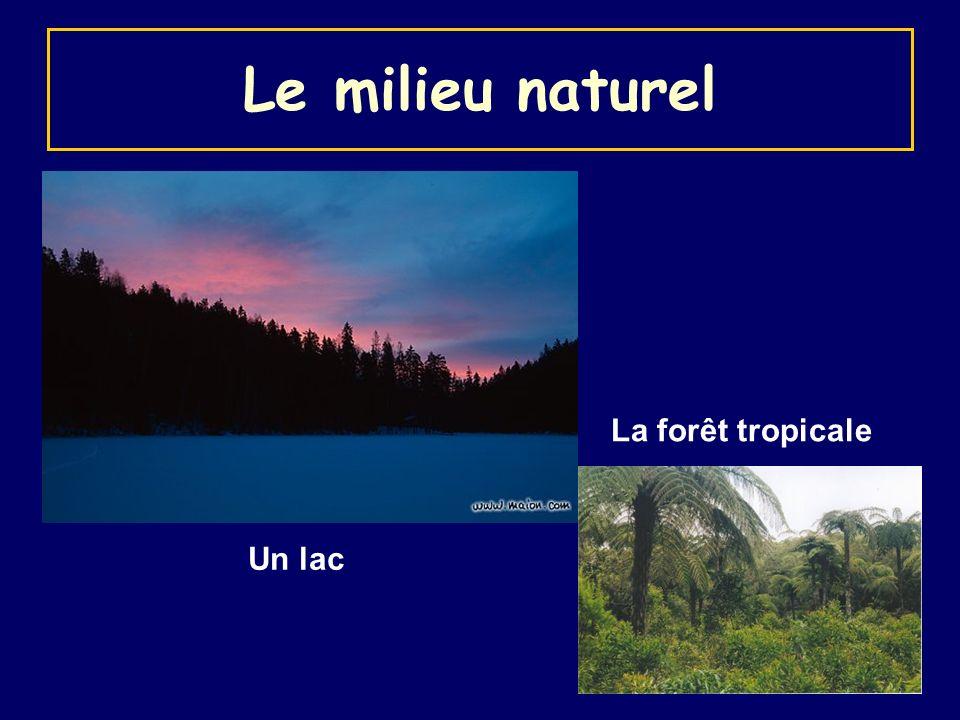 Le milieu naturel Un lac La forêt tropicale
