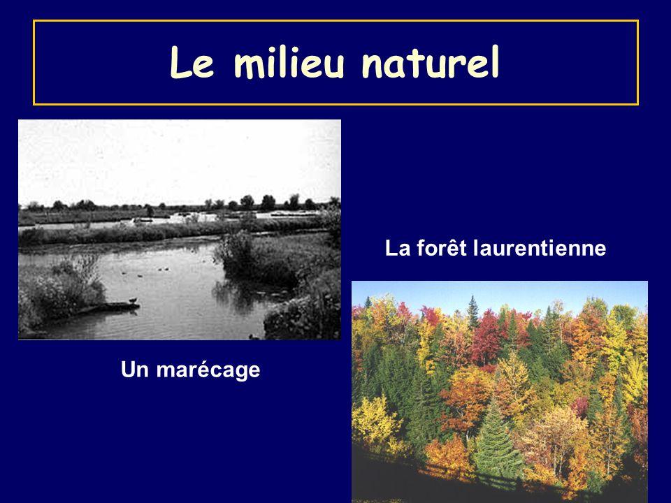 Un marécage La forêt laurentienne Le milieu naturel