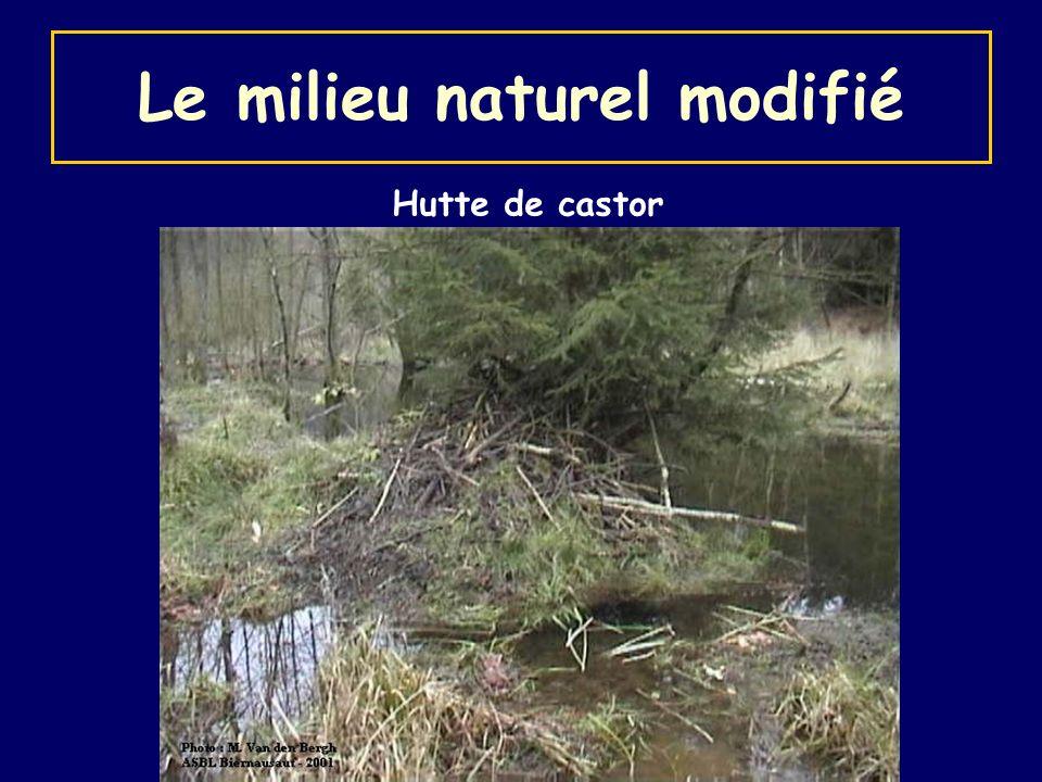 Le milieu naturel modifié Hutte de castor