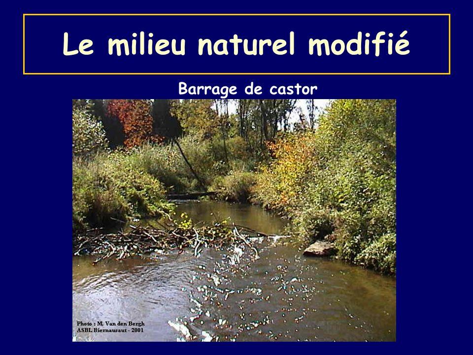 Le milieu naturel modifié Barrage de castor