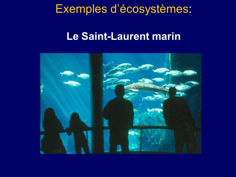 Exemples décosystèmes: Le Saint-Laurent marin