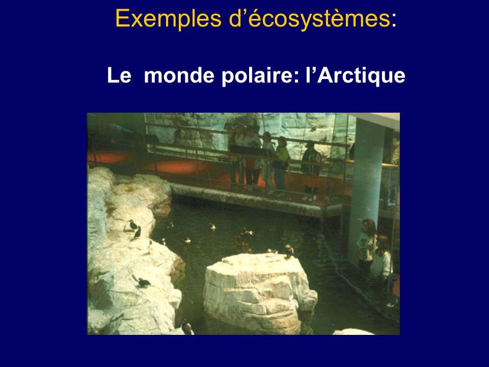 Le monde polaire larctique page 6 les producteurs le rôle des