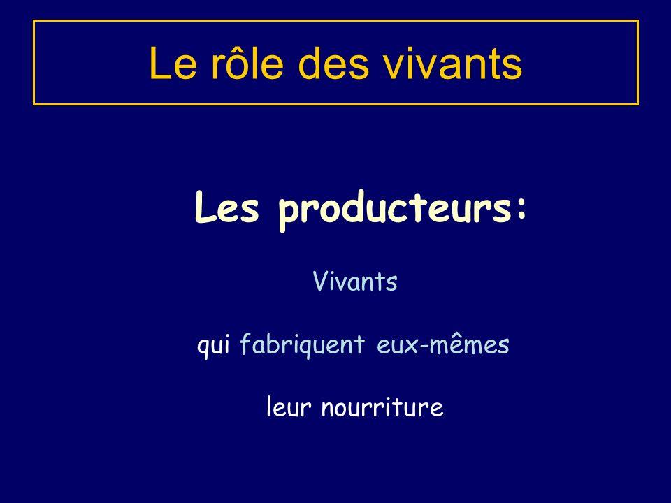 Les producteurs: Le rôle des vivants Vivants qui fabriquent eux-mêmes leur nourriture