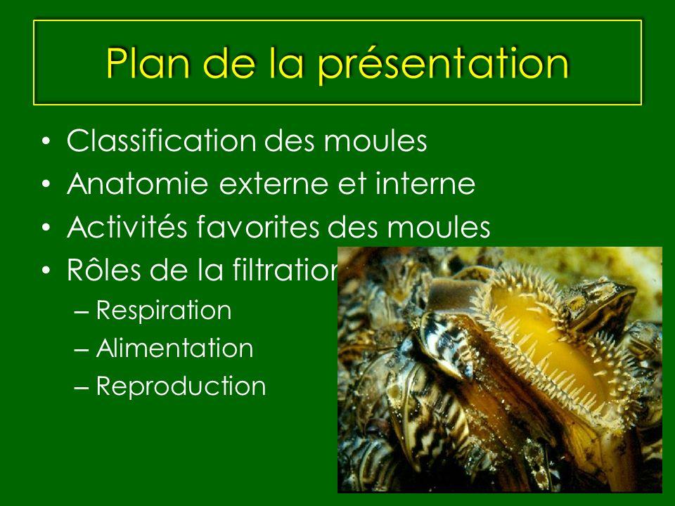 Plan de la présentation Classification des moules Anatomie externe et interne Activités favorites des moules Rôles de la filtration – Respiration – Al