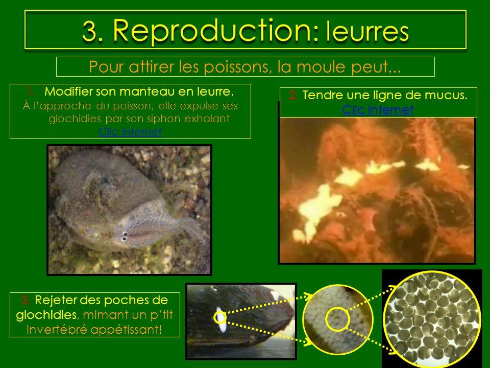 3. Reproduction : leurres Pour attirer les poissons, la moule peut... 2. Tendre une ligne de mucus. Clic internet 3. Rejeter des poches de glochidies,
