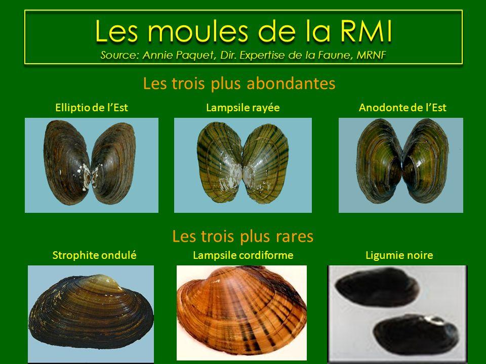 Les moules de la RMI Source: Annie Paquet, Dir. Expertise de la Faune, MRNF Elliptio de lEstLampsile rayéeAnodonte de lEst Lampsile cordiformeLigumie