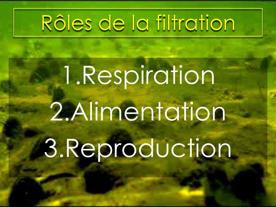 Rôles de la filtration 1.Respiration 2.Alimentation 3.Reproduction