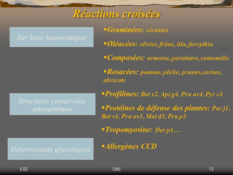 5.02OAS13 Réactions croisées Sur base taxonomique Graminées: céréales Oléacées: olivier, frêne, lila, forsythia Composées: armoise, pariétaire, camomi