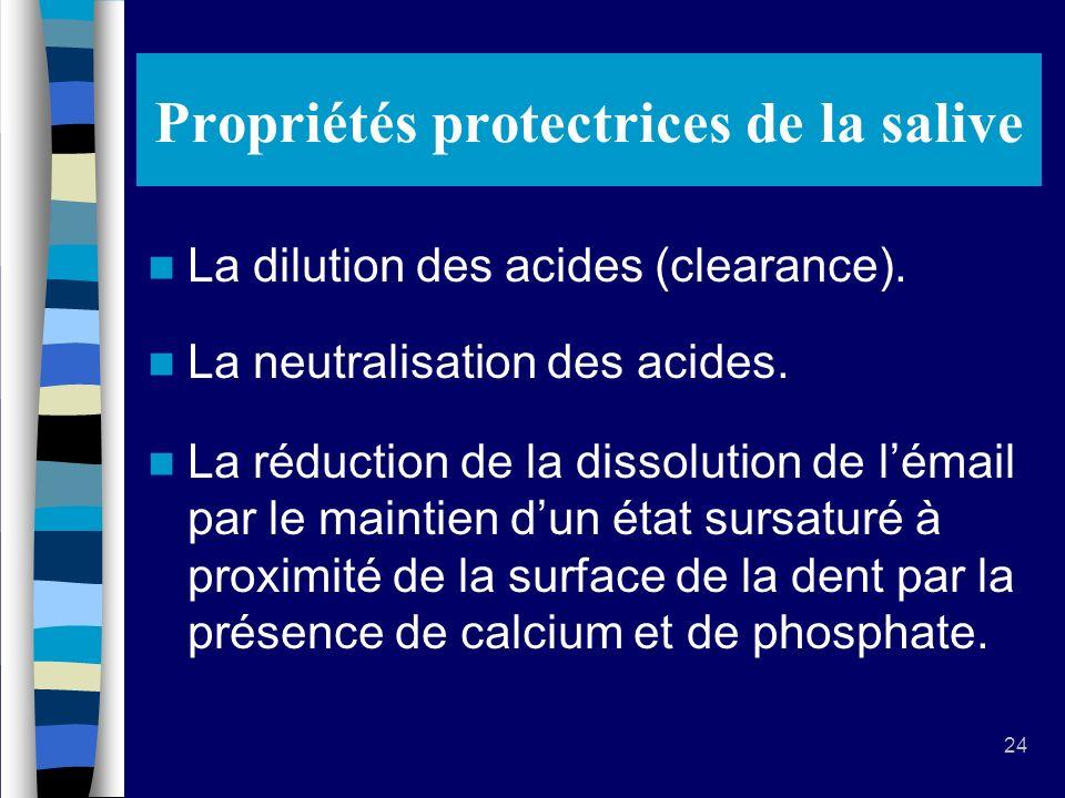 24 Propriétés protectrices de la salive La dilution des acides (clearance).