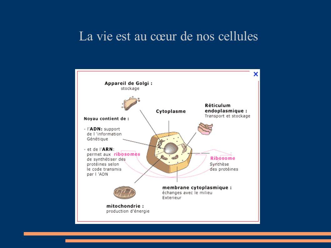 La vitalité émerge des celllules .Préservons nos cellules .