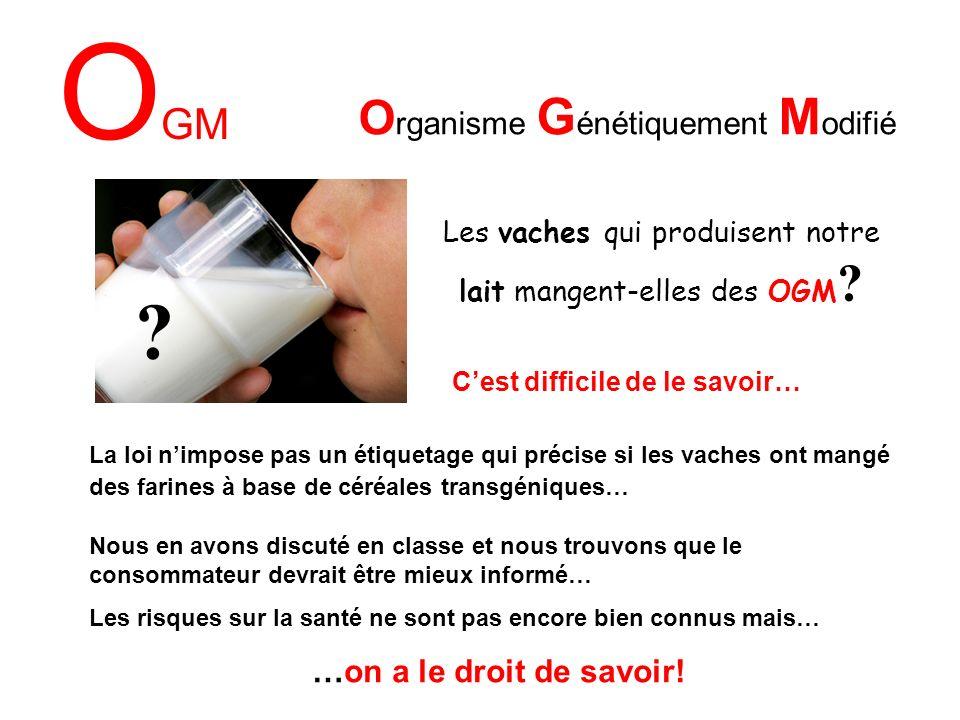 O GM O rganisme G énétiquement M odifié Les vaches qui produisent notre lait mangent-elles des OGM .