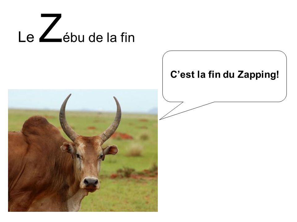 Le Z ébu de la fin Cest la fin du Zapping!