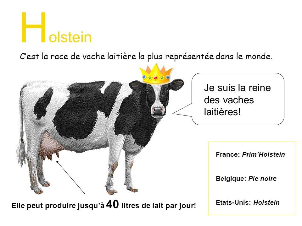 H olstein Cest la race de vache laitière la plus représentée dans le monde. France: PrimHolstein Belgique: Pie noire Etats-Unis: Holstein Je suis la r
