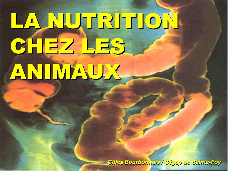 LA NUTRITION CHEZ LES ANIMAUX Gilles Bourbonnais / Cégep de Sainte-Foy
