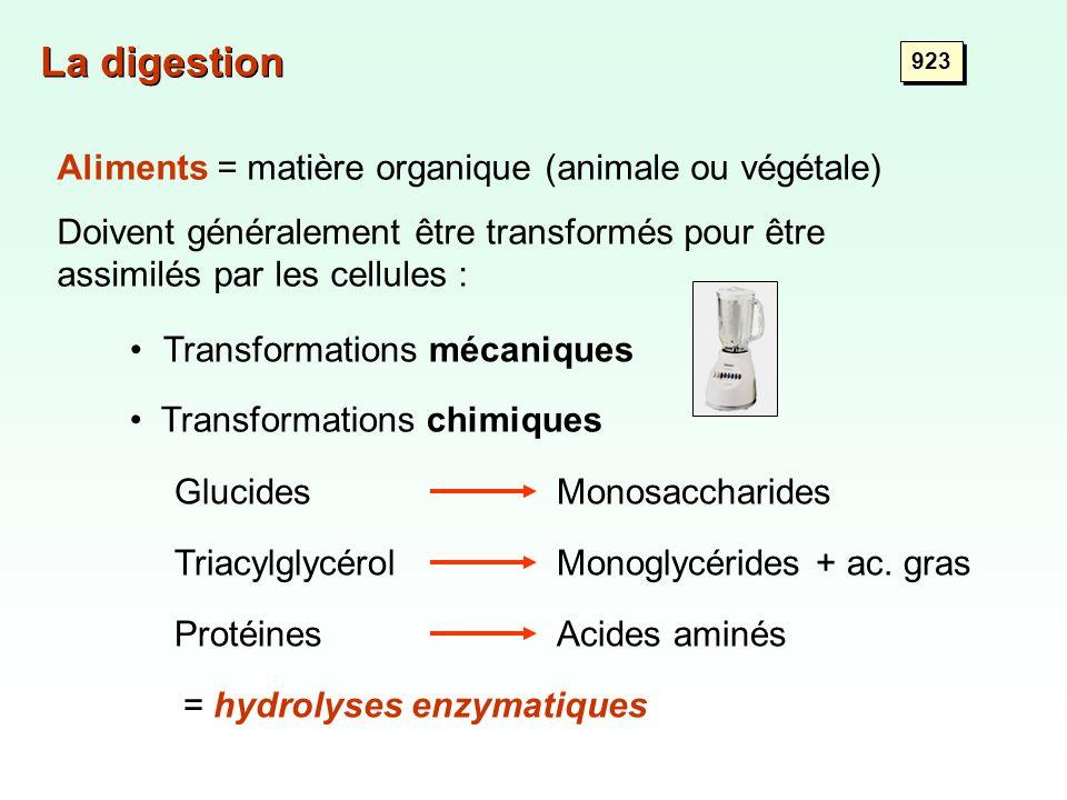 Protistes : Vacuole digestive Digestion intracellulaire Proie phagocytée Vacuole digestive 923